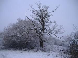Árbol y arbustos en invierno