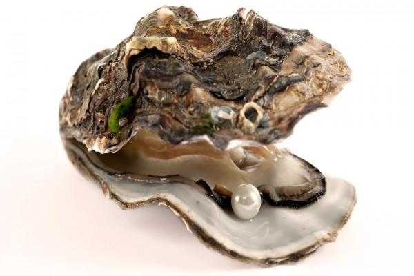 Perla en el interior de una ostra