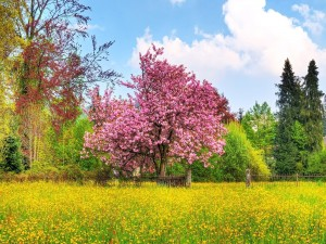 Postal: Un hermoso árbol en flor en un prado de flores amarillas