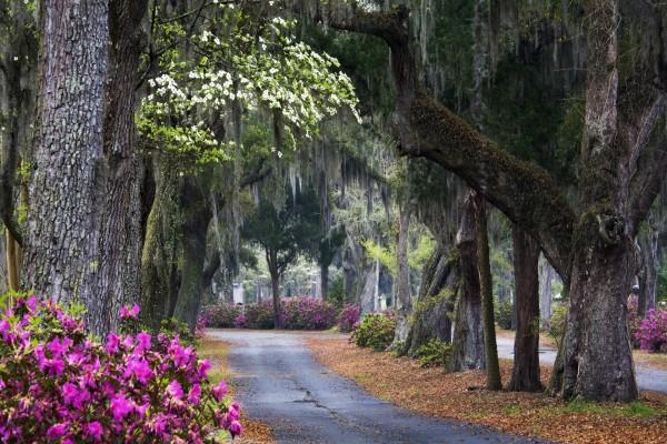 Parque con grandes árboles