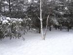 Nieve en las ramas de los árboles