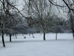 Árboles soportando el frío invierno