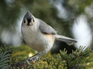 Un hermoso pájaro
