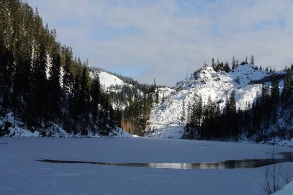 Lago congelado rodeado por un bosque de pinos