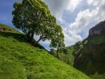 Árbol solitario en una colina