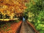 Árboles otoñales a un lado de la carretera