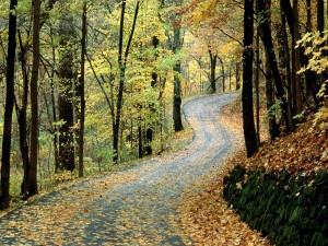 Carretera en un bosque otoñal