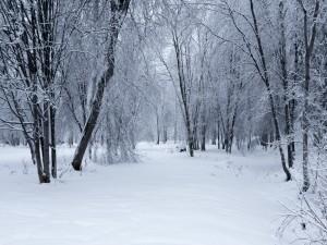 Árboles sin hojas en un paisaje cubierto de nieve