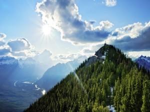 Rayo de sol sobre el pinar de la montaña