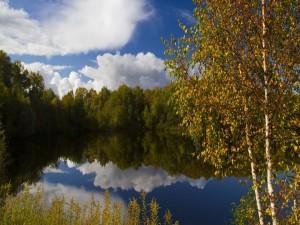 Postal: Lago en mitad de un bosque
