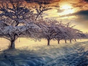 Postal: Paisaje invernal cubierto de nieve