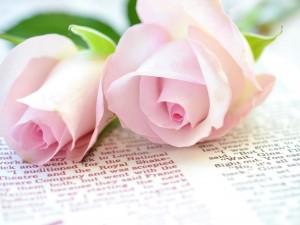 Postal: Rosas rosadas sobre un libro