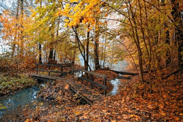 Pequeño puente en el bosque cubierto de hojas otoñales