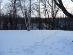 Huellas en la nieve