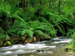 Grandes helechos junto a un río