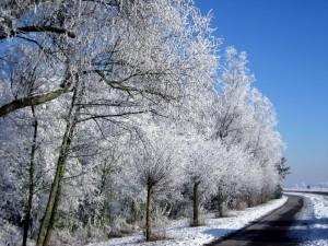 Postal: Árboles nevados junto a una carretera