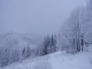 Postal: Niebla y nieve en el campo