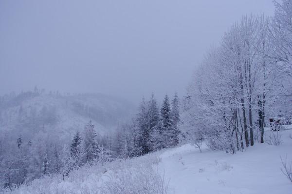 Niebla y nieve en el campo