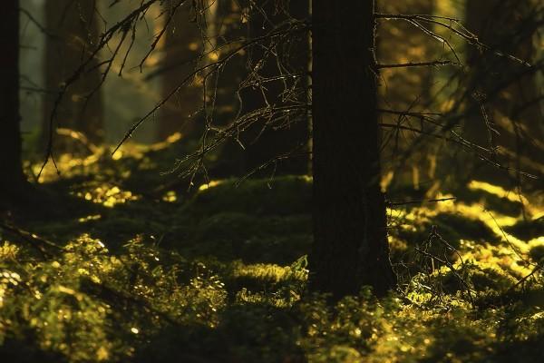 La luz del sol iluminando las plantas de un oscuro bosque
