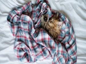 Postal: Un gatito duerme sobre una camisa