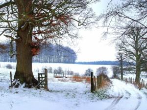 Postal: Camino vallado cubierto de nieve