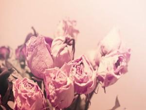 Ramos de rosas secas