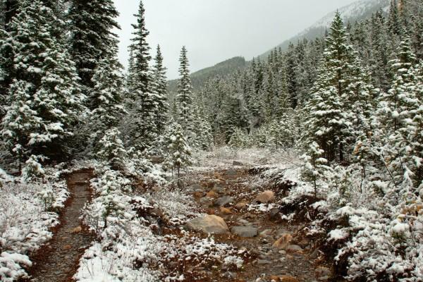 Nieve sobre plantas y pinos