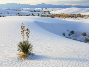 Plantas sobre la fina arena del desierto