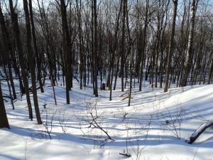 Postal: Nieve en invierno
