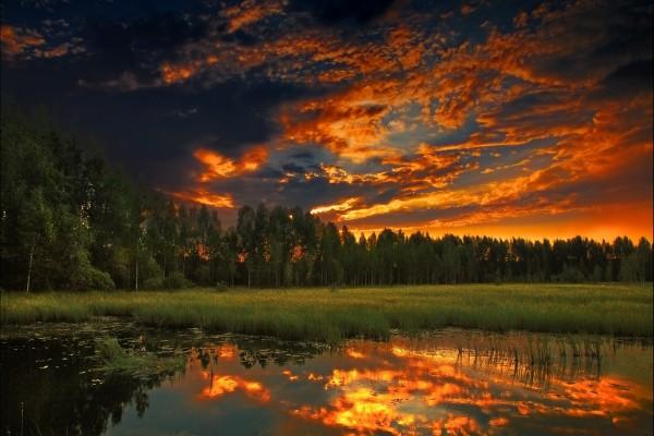 Bonito cielo con los colores del amanecer sobre un bosque
