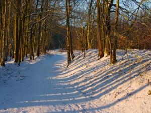 La sombre de unos árboles sobre la nieve