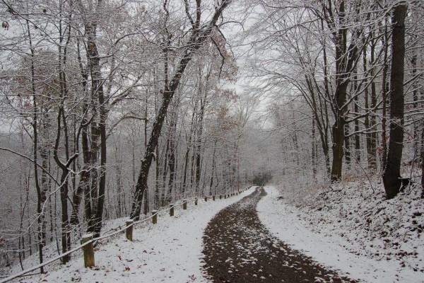 Nieve y árboles junto a una carretera