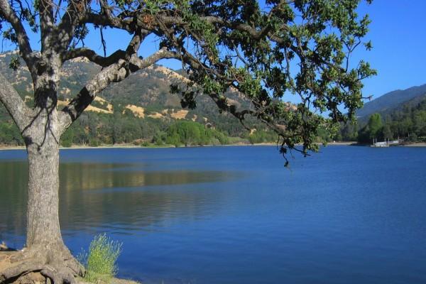 Árboles junto a un tranquilo lago (California)