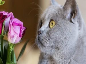 Un gato contemplando unas rosas