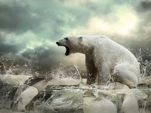 Postal: Un oso polar sobre bloques de hielo