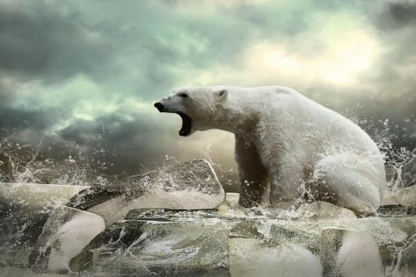 Un oso polar sobre bloques de hielo