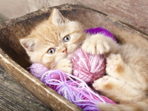 Postal: Gato jugando con unos ovillos de lana