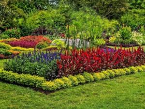 Postal: Gran variedad de flores y arbustos en un jardín