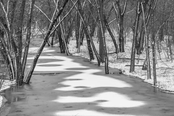 Árboles junto a un río congelado