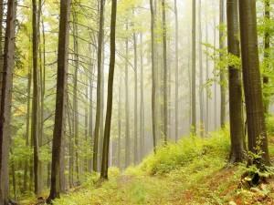 Árboles con gran altura en un bosque
