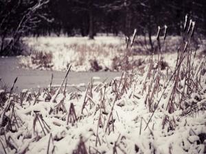 Nieve y hielo sobre unas plantas
