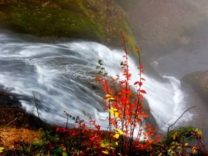 Arbusto otoñal junto a una cascada