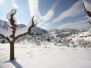 Postal: Nieve sobre las gruesas ramas de unos árboles