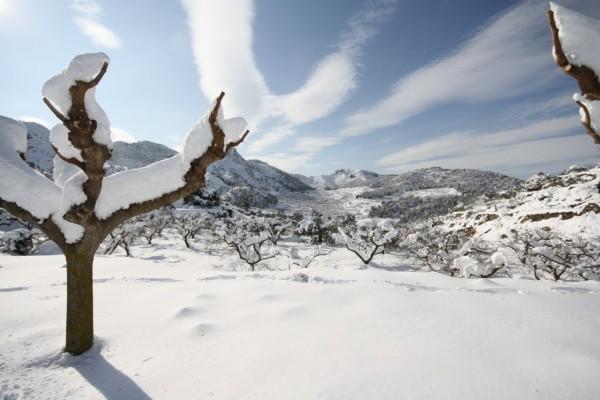 Nieve sobre las gruesas ramas de unos árboles