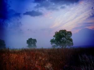 Postal: Árboles verdes vistos al amanecer