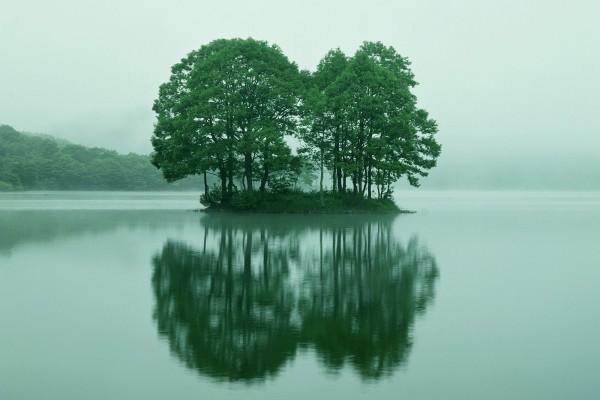 Árboles en la isleta de un lago