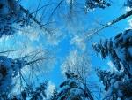 Árboles y un despejado día de invierno