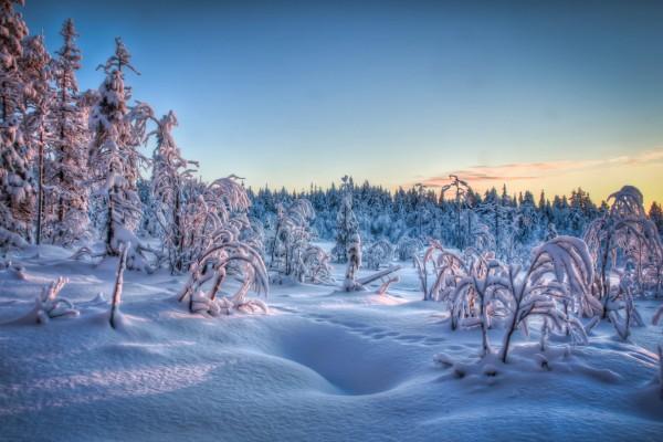 Ramas de plantas y árboles cubiertas de nieve