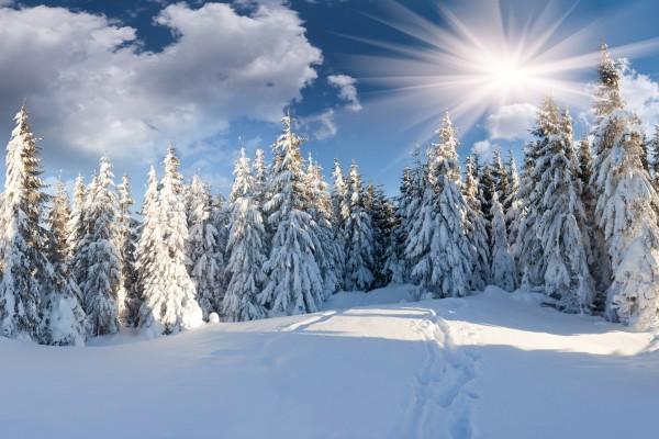 Brillantes rayos de sol iluminan el paisaje blanco