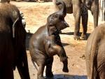 Un pequeño elefante jugando en el agua